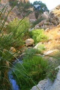 A mountain stream in the Golan.